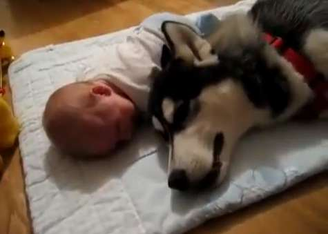 Dog sings while the baby cries