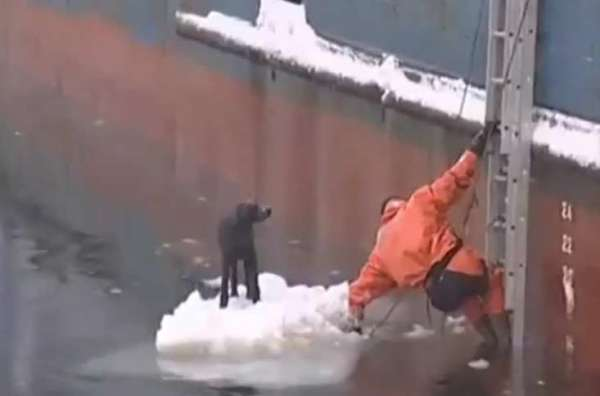 Amazing Compilation of People Rescuing Dogs in Need