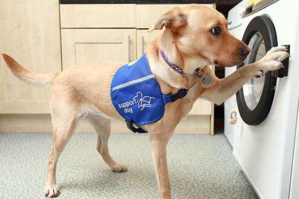 Duffy The Service Dog Does The Laundry Like A Pro!