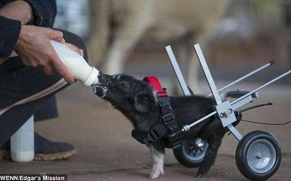 leon trotsky in a wheelchair
