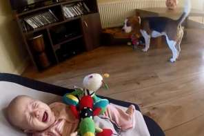 Dog Showers Baby With Gifts To Stop It From Crying