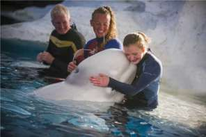 Sea World Helps Paralympic Swimmer Realize Her Dream Of Being Up Close To Beluga Whales
