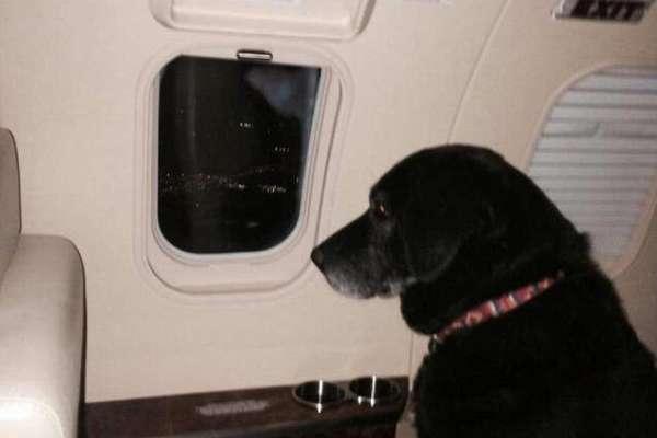 Dog in jet