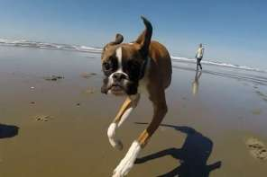 Duncan: An Amazing Two Legged Dog Who Gets By Without Prosthetics