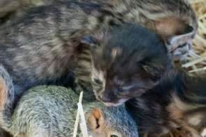 Squirrel Is Adopted By Cat And Learns To Purr