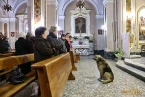 After Dog's Owner Dies,The Dog Still Goes To Church Every Sunday