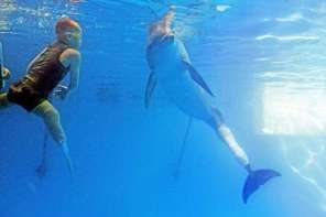 Boy With Prosthetic Flippers Swims With Dolphin Who Has An Artificial Fin