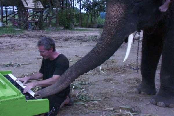 elephant plays piano