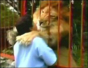 lion and rescuer reunited