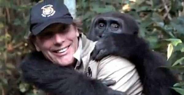 man reunited with gorilla