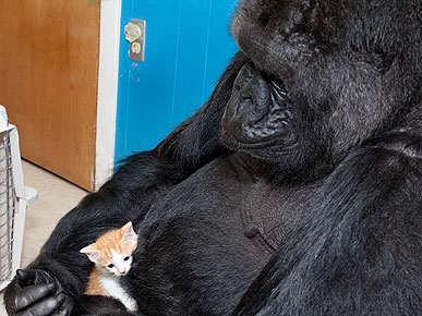 koko picks out a pet kitten