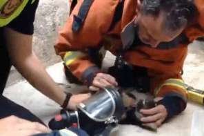 A Spanish Firefighter Gives Mouth To Mouth Resusitation To A Puppy