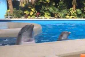 Dolphin Peek-A-Boo