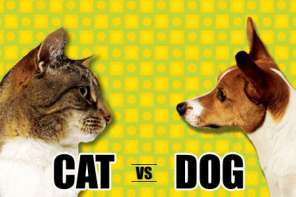 Which Pet Is Better? A Funny look At Cats VS Dogs