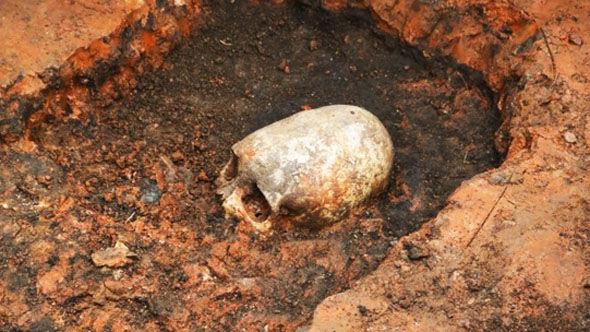 Skull-323227