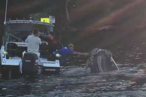 Fisherman Keeps Whale From Choking