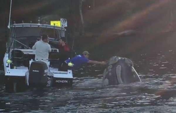 Whale-Rescue-670-665x385