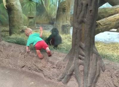 toddler playing at zoo with Gorilla