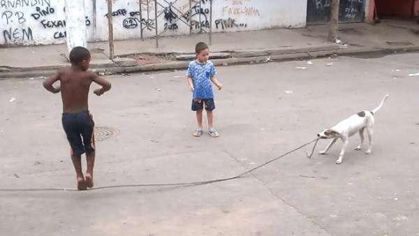 Dog-jump-rope