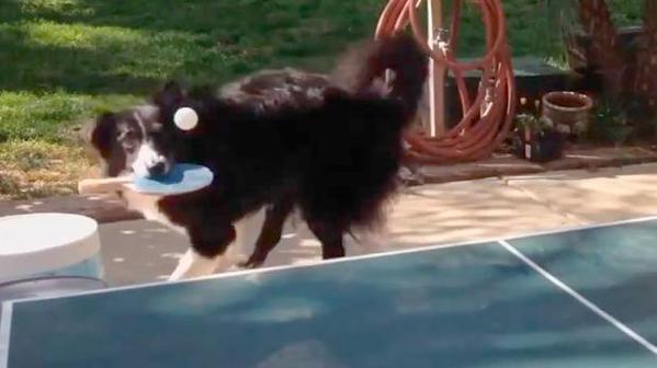 dog ping pong