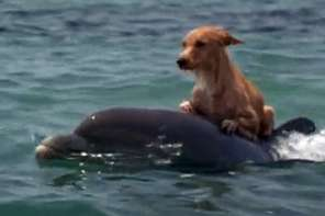 Dolphin Saves The Dog