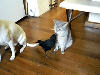 BIRD_FEEDS_CAT_n_DOG1