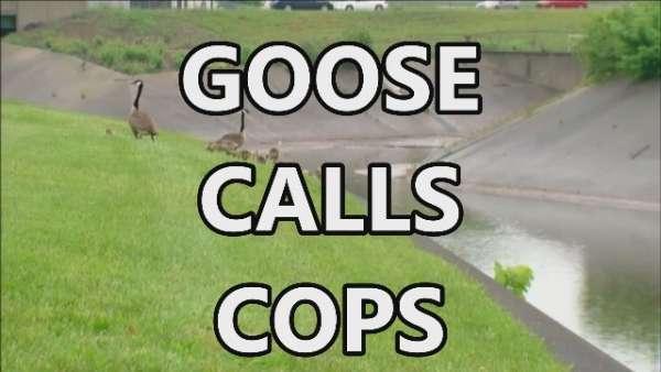 goose calls cops