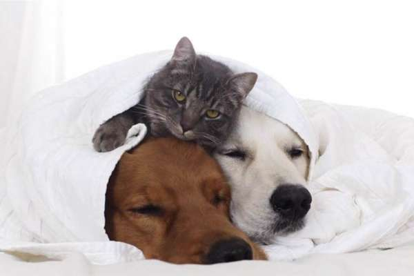 cat and two dogs