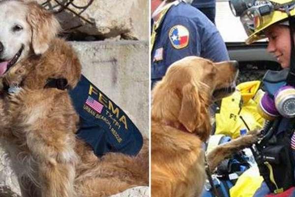 last 911 dog died
