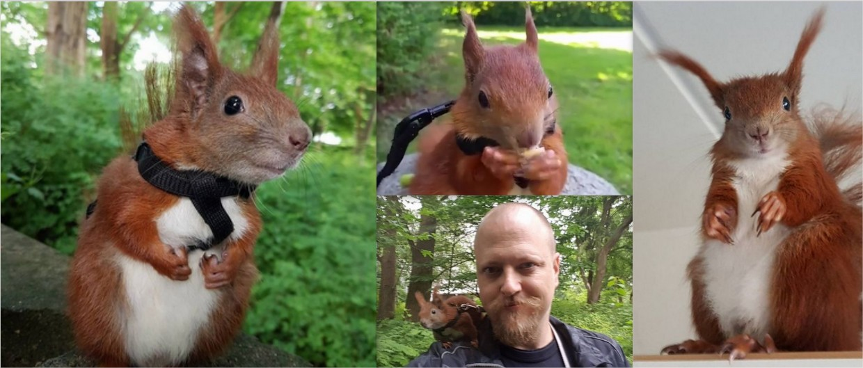 Squirrel Makes An Unlikely Friend