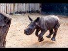 warren rhino