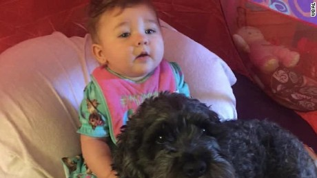Dog Dies Saving Baby From Fire