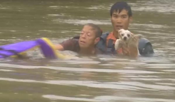heroes rescue woman and dog