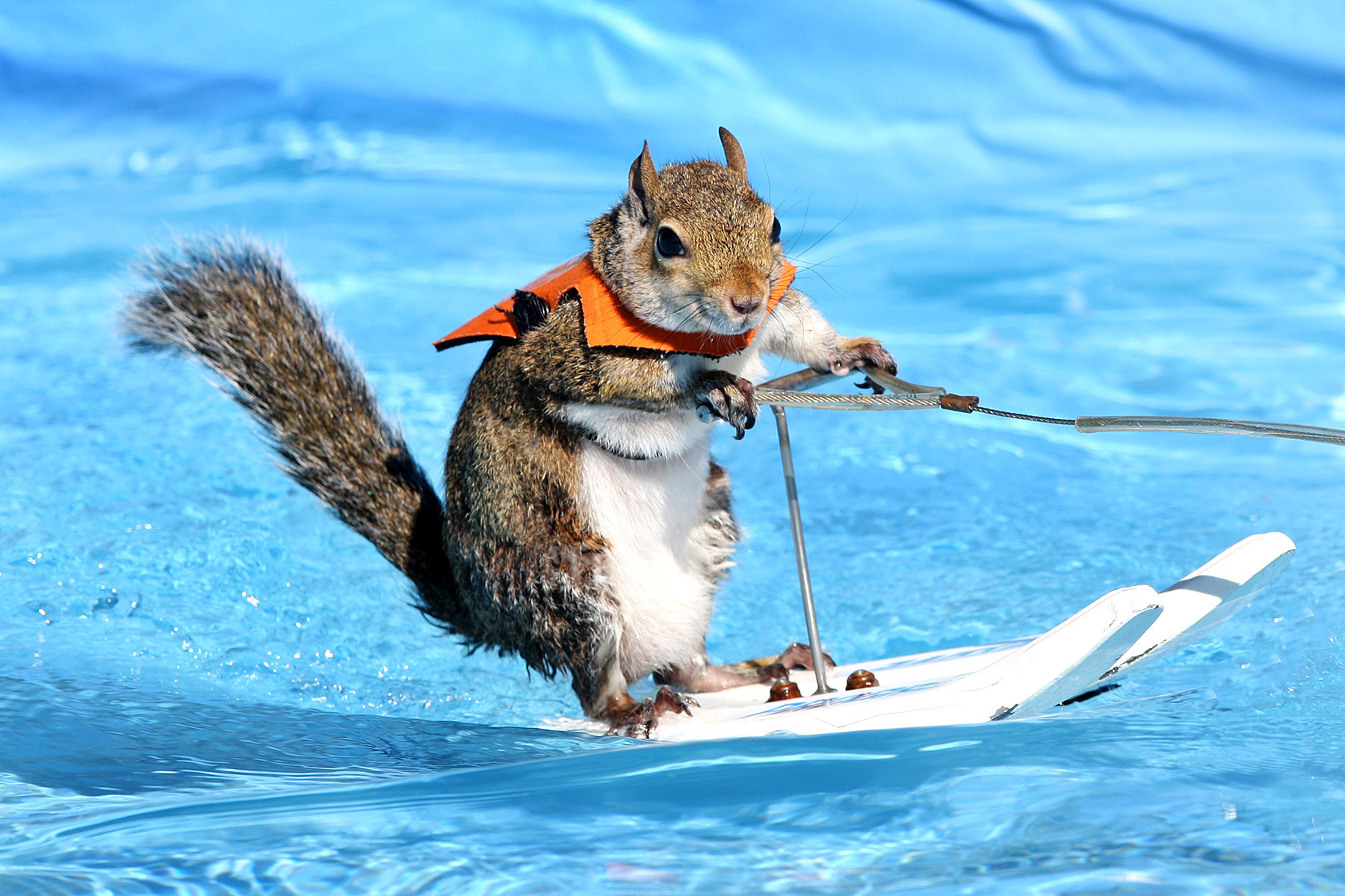 This Squirrel Can Waterski