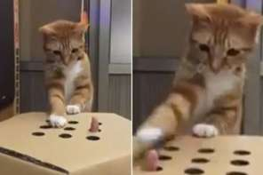 Kitten Plays Whack-A-Finger