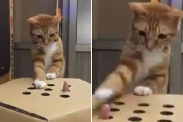 kitten-plays-whack-a-finger