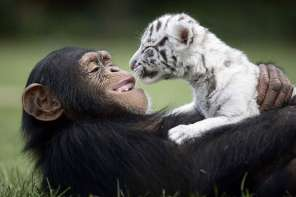 Top Ten Unlikely Animal Friends