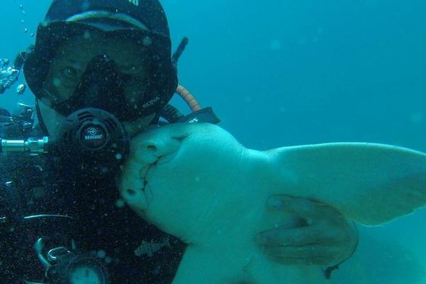 shark cuddler