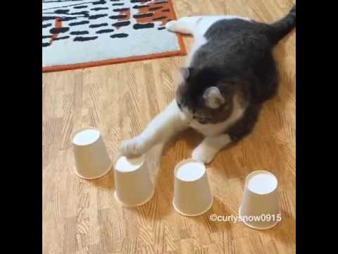 woman hides ball under cup to fool cat