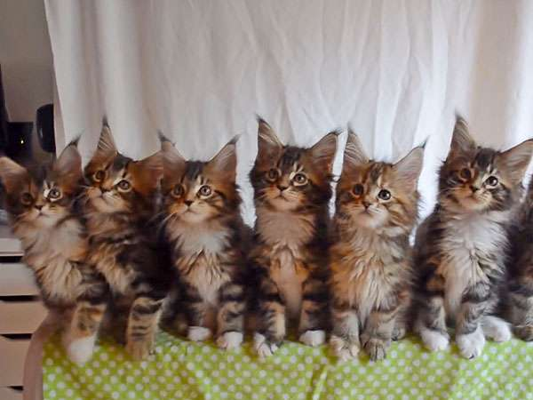 kittens move in unison