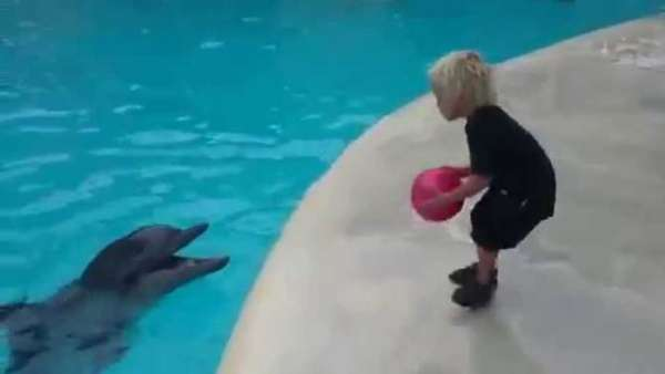 dolphin playing ball with child