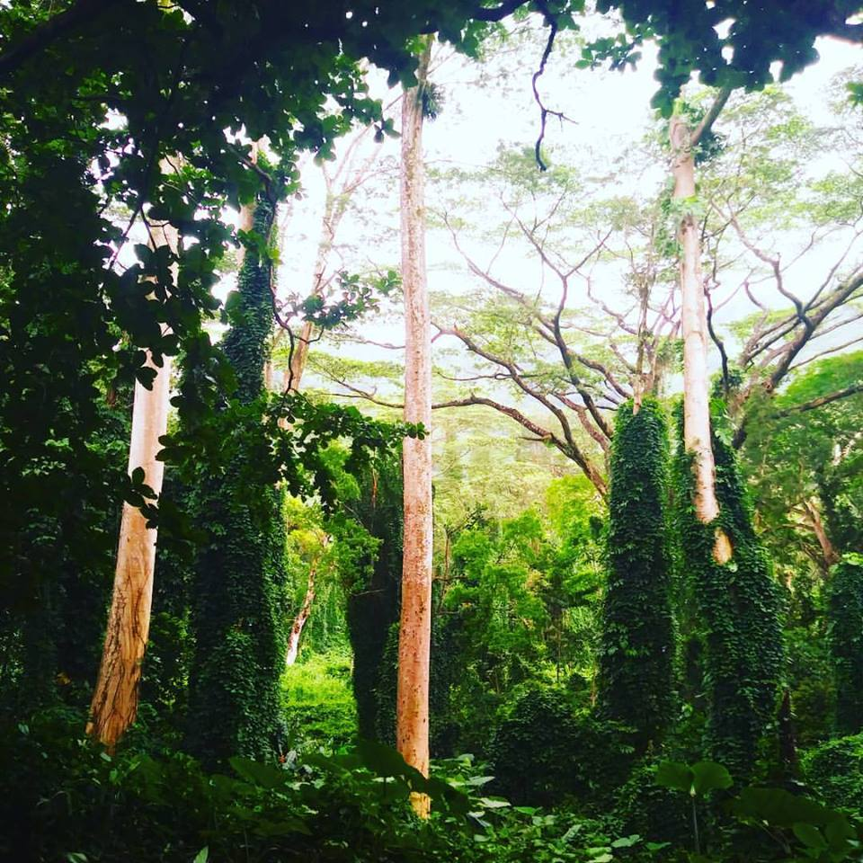 trees tropics