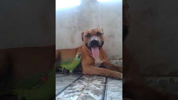 dog and parrot play together
