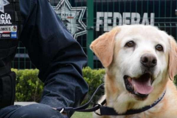 equador police dogs