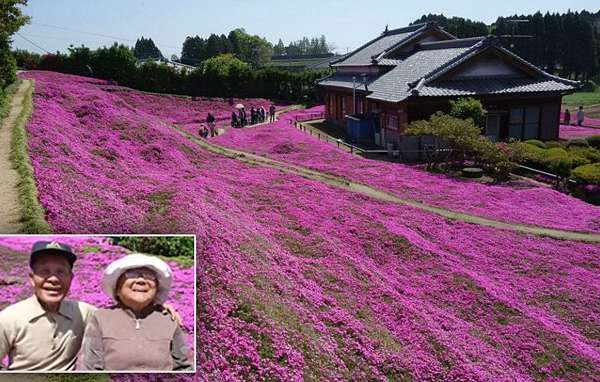 A Man Spent More Than 20 Years Creating A Garden Of Flowers For His Blind Wife To Smell This is Toshiyuki Kurogi and Yasuko Kuroki. They are dairy farmers from Miyazaki Prefecture in Japan and have been married for 60 years Taken from Facebook page of Shintomicho office Government Organisation without permission