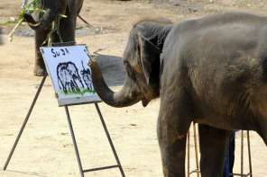 Amazing Painting Elephant Named Suda