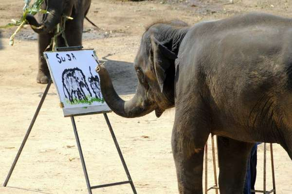 suda elephant painter