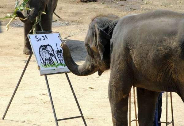 suda elephant painter