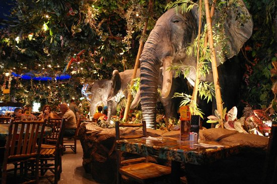 rainforest-cafe 2
