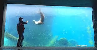 sea lion fetch